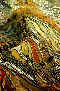 It is a beautiful world – Yuanyang Rice Terraces in Yunnan, China (by ichauvel). Who knew agriculture could be so gorgeous! Aerial Photography, Landscape Photography, Scenery Photography, Abstract Photography, Night Photography, Beautiful World, Beautiful Places, Rice Terraces, Patterns In Nature