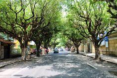 Jataí News: Arborizar Jataí é preciso, é urgente! Termômetros ...