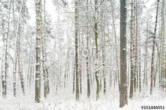 Forest after a snowfall. Winter landscape. https://en.fotolia.com/id/101446051 #fotolia #forest #snow #snowfall #winter #weather #climate #겨울 #冬 #冬季 #شتاء