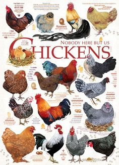 Chicken Quotes 1000 piece puzzle