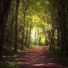 El trail running es un tipo de actividad física que consiste en correr y se desarrolla en un entorno natural, por lo general, en montañas con rutas poco asfaltadas Country Roads, Running Tips, Water Bottles, Hydration Pack, The Great Outdoors