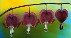 Mayan Textile w/ Flowers Unusual Flowers, Amazing Flowers, Beautiful Flowers, Tropical Flowers, Colorful Flowers, Pink Flowers, Blooming Flowers, Bleeding Heart Flower, Bleeding Hearts
