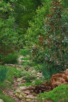 dry creek bed in a native garden.  My new house has some erotion so I think I may turn it into a dry creek bed.