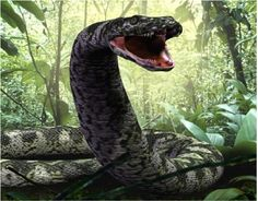 Titanoboa cerrejonensis, a prehistoric snake found in Colombia during the Selandian, a middle stage in the Paleocene geologic time period