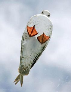 Gull from below