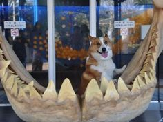 this picture,   108 Reasons Why Corgis Really Are That Great
