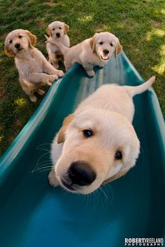 Puppies playing on the slide