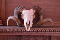 VINTAGE RAM SKULL, BIG HORN SHEEP SKULL, REAL TAXIDERMY RAM SKULL  What a statement piece. Hang it, place it, displays great! You can tell this was