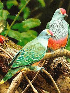 Vögel auf einem Ast - Animation Telefon №1287484