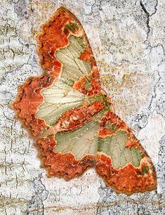 Beautiful Bugs, Beautiful Butterflies, Amazing Nature, Butterfly Crafts, Butterfly Wings, Butterfly Kisses, Beautiful Creatures, Animals Beautiful, Purple Butterfly Tattoo
