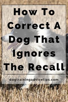 Puppy Care, Dog Care, Homemade Dog, Service Dogs, Dog Behavior, Dog Training Tips, Dog Quotes, Pitbulls, Doberman Dogs