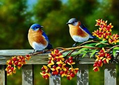 Shop our best value Bird Artwork on AliExpress. Check out more Bird Artwork items in Home & Garden, Men's Clothing, Cellphones & Telecommunications, Toys & Hobbies! And don't miss out on limited deals on Bird Artwork! Pretty Birds, Love Birds, Beautiful Birds, Beautiful Couple, Beautiful Images, Animals Beautiful, Beautiful Bird Wallpaper, Jackson's Art, Spring Birds