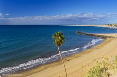 Playa del Inglés beach with palm tree and the Maspalomas dunes in the background