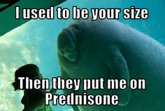 hehe ...gotta love prednisone...that's some evil stuff! On the positive side, it does work for me so I'm grateful for that but not the weight and raging hunger that goes along with it. Oh yeah, I forgot about the sleep part of predisone--you don't! #crohns #crohnsdisease