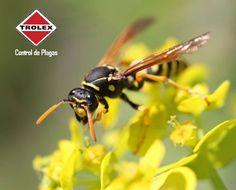A los patios de las casas pueden llegar  avispas a anidar, estos insectos son temperamentales y su presencia cerca de nuestro entorno puede conducir a dolorosas picaduras.  En primer lugar, revise si tiene avispas en su patio.