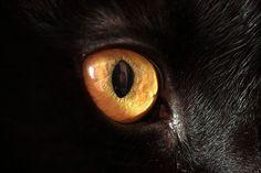 крупный план, глаза, кошки, животные - обои на рабочий стол