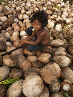 A boy in Efate, on a coconuts hill. The coconuts are used in Vanuatu as oil for cars! The coconuts are dried, then pressed, then the oil goes into the cars ~ and it works! Vanuatu, former New Hebrides, South Pacific Islands // © Eric Lafforgue