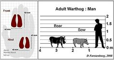 Wildlife Ranching Warthog comparison to man Vertebrates, Animal Kingdom, Charts, Wildlife, Modern, Animals, Graphics, Trendy Tree, Animales