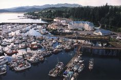 Port Hardy, British Columbia - -> A small serene little town located on the Northern tip of Vancouver Island. Immigration Canada, Family Tree Research, Best Places To Travel, Vancouver Island, Canada Travel, Holiday Travel, British Columbia, West Coast, Genealogy