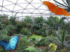 Papiliorama near Bern Alpine Coaster, Interactive Museum, Ropes Course, Nocturnal Animals, Butterfly House, Tropical Garden, Family Activities, Switzerland, Bern