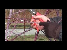 How to Prune Black Raspberry Plants in Late Winter or Early Spring - Gurney's Video Growing Raspberries, Growing Grapes, Black Raspberries, Raspberry Plants, Raised Bed Garden Design, Urban Farmer, Black Seed, Farm Gardens, Outdoor Landscaping