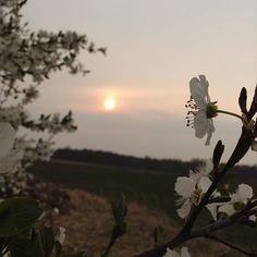 Jarka Redneval (@rednevalstyle) • Instagram photos and videos Sunsets, Celestial, Photo And Video, Videos, Flowers, Plants, Photos, Outdoor, Instagram