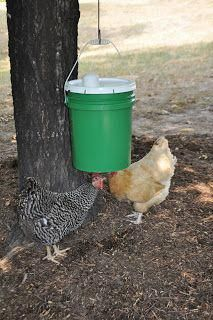 🔥 Offer Good Until They're Gone =>  If you are crazy in love with raise chicken For beginners backyards how to build, i'm with you.Many people struggle to raise chickens because they don't know this trick,click on the link to discover it today. This won't last long Pet Chickens, Raising Chickens, Chickens Backyard, Urban Chickens, Keeping Chickens, Rabbits, Chicken Waterer, Chicken Feeders, Best Egg Laying Chickens