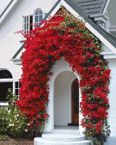 [I like this little enclosed porch area--shelter from rain or hot sun.] Arche bougainvilliers rouge