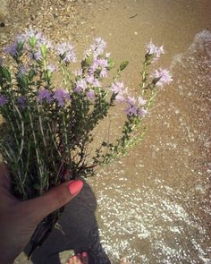 #sea #summer #flowers