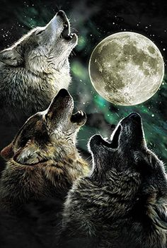 More wolves howling