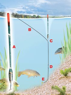 Floatfishing rig for margins
