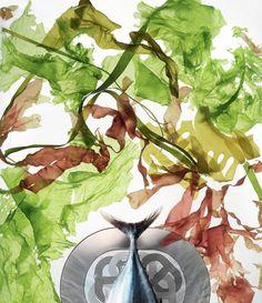 Salad of seaweed and semi-raw fish. Raw Fish Recipes, Hermes Online, Edible Art, Art Deco Design, Book Making, Seaweed, Us Foods, Bellisima, Tai Chi