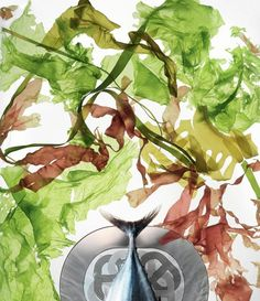 Salad of seaweed and semi-raw fish. Recipe Élisabeth Larquetoux-Thiry. Rallye 24 service. #Recipe #Recette #Hermes