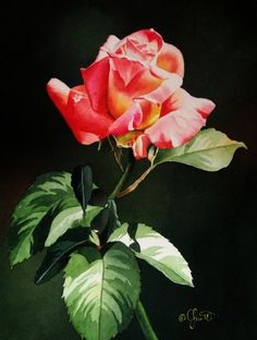 Sunlit Rose Bud, painting by artist Jacqueline Gnott