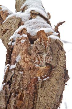 NJ Wight's Wild! Life — Camouflage.