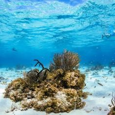 You might have read the wonderfully detailed blog about Johnny's diving and adventure explorations in Little Cayman a little while ago. If you haven't, I urge you to check it out, because today we are going to be talking all about the Little Cayman's older brother, Grand Cayman. Now, I'm yet to visit all of …
