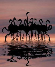 """Flamingos at Sunset"""
