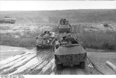 Three Sd.Kfz. 251 and an Sd.Kfz. 250/3, Russia, August 1942