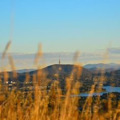 We are in awe of this photo by Instagrammer @therealog_88 of Black Mountain and Telstra Tower emerging through long grass on Mount Rogers. Thanks for sharing and tagging #visitcanberra