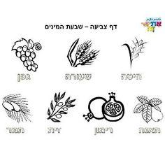 shavuot celebration israel