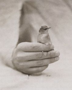 """Victor Schrager. From the series """"Bird Hand"""", 1994–2001"""