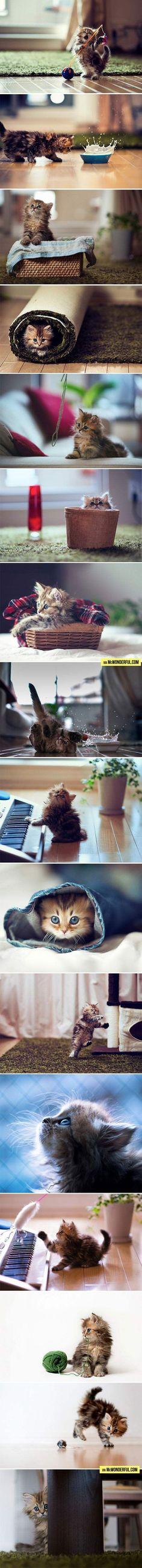 Adorable baby kitten doing kitten things. Melts my heart