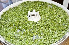 Sale at the local market on frozen veggies, but not enough room in the freezer? Dehydrate those frozen veggies! Pea Recipes, Green Peas, Freeze Drying, Home Food, Preserving Food, Popcorn, Preserves, Freezer, Veggies