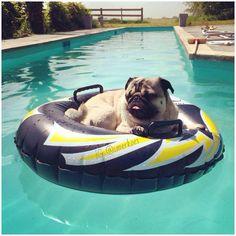 Pug Love, I Love Dogs, Cute Dogs, Best Dog Breeds, Best Dogs, Dog Pool Floats, Boston Terrier Pug, Boxer Bulldog, Pug Photos