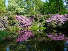Reminds me of Monet's beloved Giverny.
