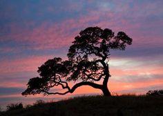 Texas sunset in Bandera, TX