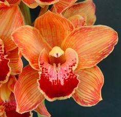Wholesale Orange Orchid