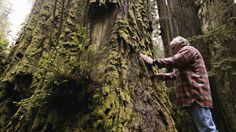 A Man's Mission: Revive The Last Redwood Forests