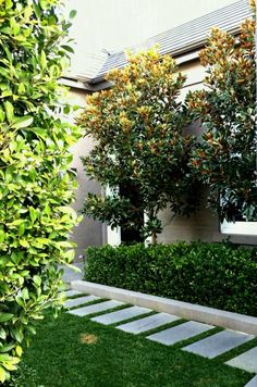 Little Gem Magnolia Trees Gardenia Ficus hedge Classic contemporary landscape style 17 Simple and Beautiful Backyard Landscaping Ideas for Beautify Your Garden Agus Ra. Traditional Landscape, Contemporary Landscape, Landscape Design, Garden Design, Path Design, Landscape Plans, Modern Landscaping, Front Yard Landscaping, Landscaping Ideas