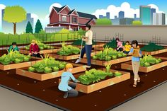 A closer look at how community gardens and urban farms are transforming American cities.